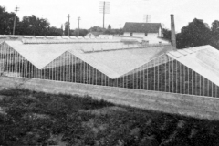 Kinsman Greenhouses - 1905 (located on E. Water St. - 4th Ave. N.E. - by the Cedar River.) This is looking over them towards the NE